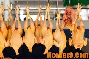 Mẹo phân biệt gà ta và gà Trung Quốc đơn giản, chính xác