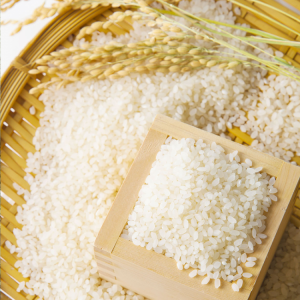 Gạo Già Diu Xíu Mầm