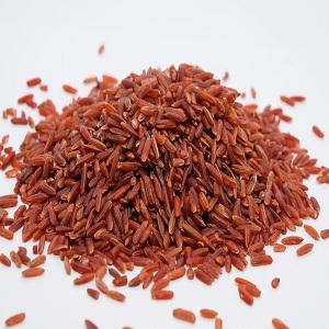 Gạo Một Bụi Đỏ